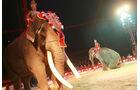 Löwen von MAN rollen für den Circus Krone