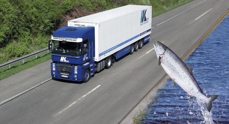 STI Freight Management, Fisch, Logistik