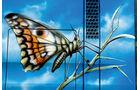 TGA gegen TGX, Schmetterling